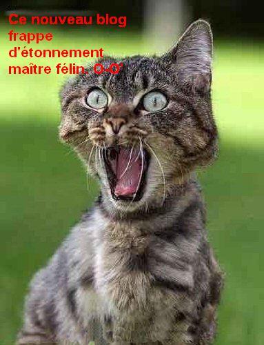 chatpeurhumouranimal2.jpg